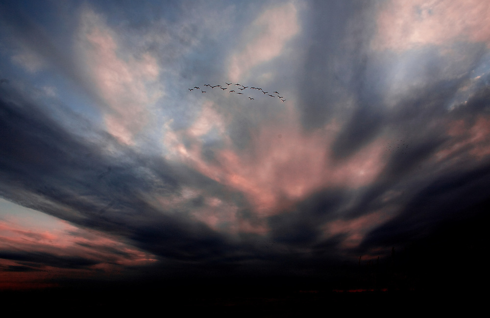 PlatteRiver2008.20-Sandhill Cranes make their annual stopover along the Platte River in central Nebraska during the spring migration.