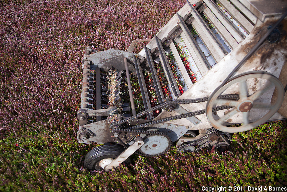 Detail of cranberry picking machine