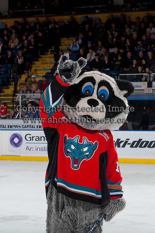 KELOWNA, CANADA - JANUARY 3: Rocky Raccoon stands on the ice during intermission against the Kelowna Rockets against the Tri-City Americans on January 3, 2017 at Prospera Place in Kelowna, British Columbia, Canada.  (Photo by Marissa Baecker/Shoot the Breeze)  *** Local Caption ***