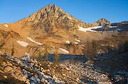 Subalpine Larch (Larix lyallii) and Black Peak, North Cascades Washington