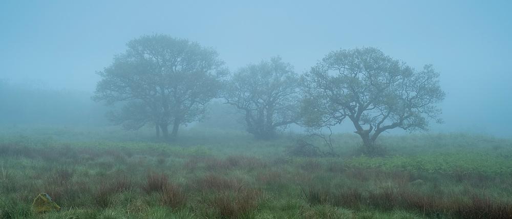 Trees in a misty landscape scene in Scotland