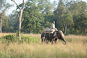Mna riding an elephant in Corbett National Park, Uttarakhand, India