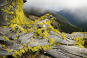 Lichen grows on an old Spruce stump high on Hurricane Ridge above the Strait of Juan de Fuca, Olympic National Park, Washington.