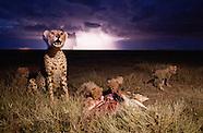 2012 - TANZANIA
