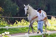 Manuel Campilho, (POR), Aonito, Beduino Da Lagoalva, Bucarine Da Lagoalva, Coracao, Xisto - Horse Inspection Driving - Alltech FEI World Equestrian Games&trade; 2014 - Normandy, France.<br /> &copy; Hippo Foto Team - Leanjo de Koster<br /> 25/06/14