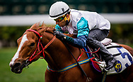 Gunnison with Joao Moreira leads the field off the turn during a  Barrier Trails at Happy Valley Racecourse on January 20, 2018 in Happy Valley Hong Kong. (Photo: Alex Evers)