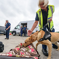 Customs dog 'Marley' and handler Caroline Bowman sniffs out a bundle of cash hidden in random luggage at a demo by customs officers during the Kinsale Regatta at the weekend.<br /> Picture. John Allen