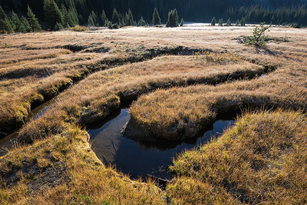 Small stream winding through a meadow in Oregon's Wallowa Mountains.