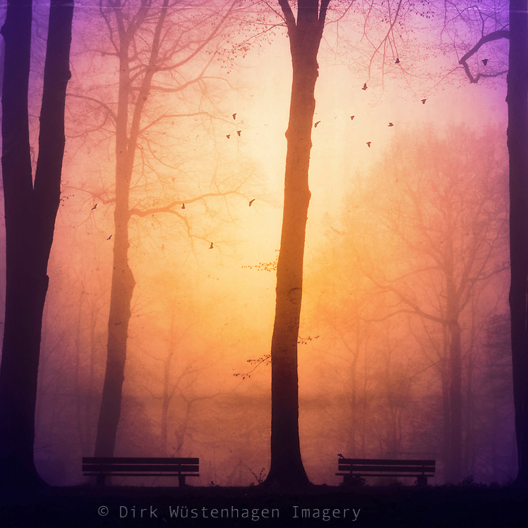 Moody fog scene with trees and two benches. <br />