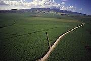 Sugar Cane Fields, Oahu, Hawaii<br />