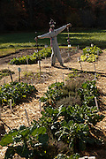 Vegetable garden with scarecrow at the farm and home of author and poet Carl Sandburg in Flat Rock, NC