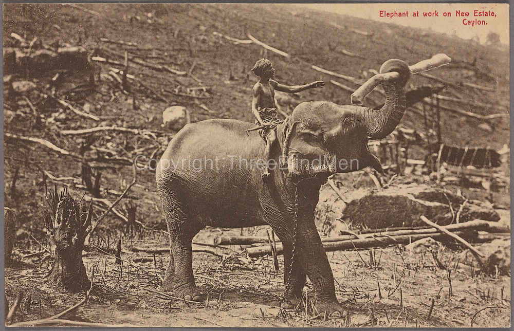 Elephant at work on new estate in Ceylon. A.W.A. Pl&acirc;t&eacute; &amp; Co. 1907 - 1918<br /> The Digital Public Library of America
