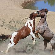 Stallions Spar