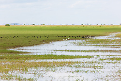 Birds flock to a floodplain on Liveringa Station in the Kimberley wet season.