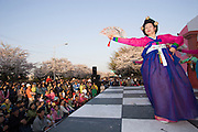 Yeouido Island. Hundreds of Thousands of Seoulites enjoy the Cherry Blossom in Yunjungno, the street around the National Assembly lined by cherry trees which has been cleared from traffic for these days. Traditional Korean dancers on a stage in front of National Assembly building.