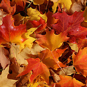 &quot;Those Magical Leaves&quot; <br />