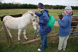 People with learning disability on trip to farm stroking a donkey