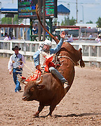 A bull rider at the 2009 Cheyenne Frontier Days shows good form as his bull tries to thow him into the dirt.