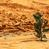 Small plant growing in dried river bed