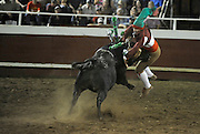 Amadores de Merced's Antonio Melo grabs the bull during the bloodless bullfight in Gustine, June 30, 2014.