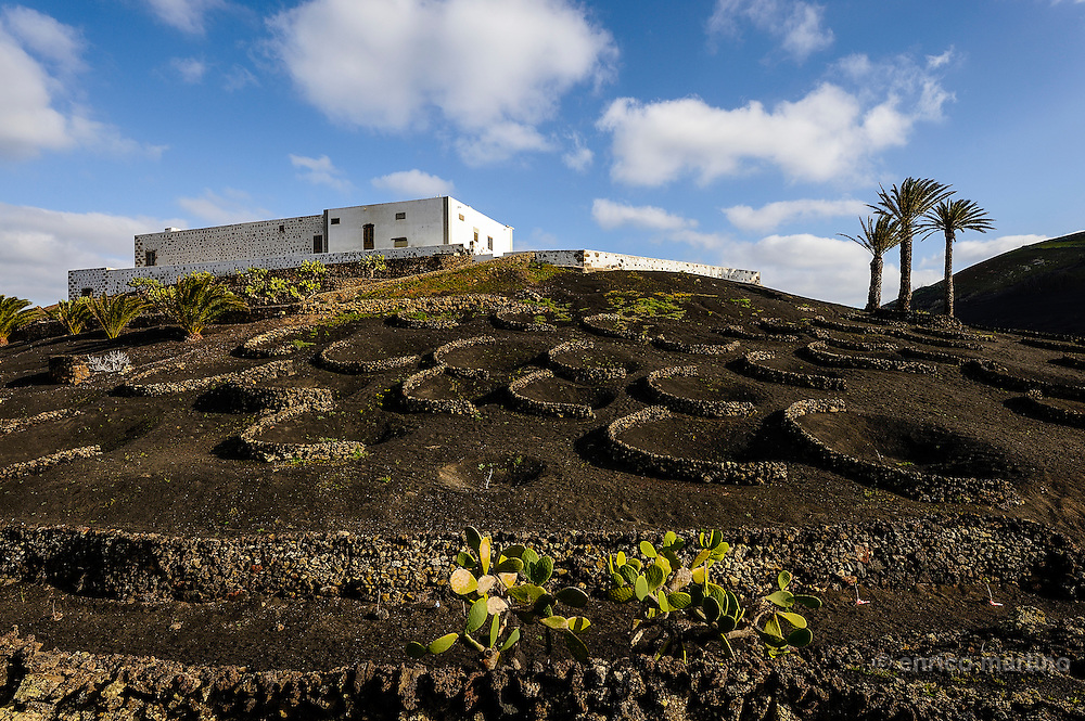 Lanzarote, La Gerla, the wine growing region.The landscape is truly unique to Lanzarote as each vine is individually grown in a sunken pit (up to 3 meters deep) and about four to five meters wide and as the island can be windy they add a dry semi-circular rock wall called a Zoco.  The vines are planted directly in the baron soil which is then coved and protected by the small black lava stone called Picon.These black pits and crescent stone walls produce a very productive and protected area for the vine and make for an extraordinary view across the surrounding areas.