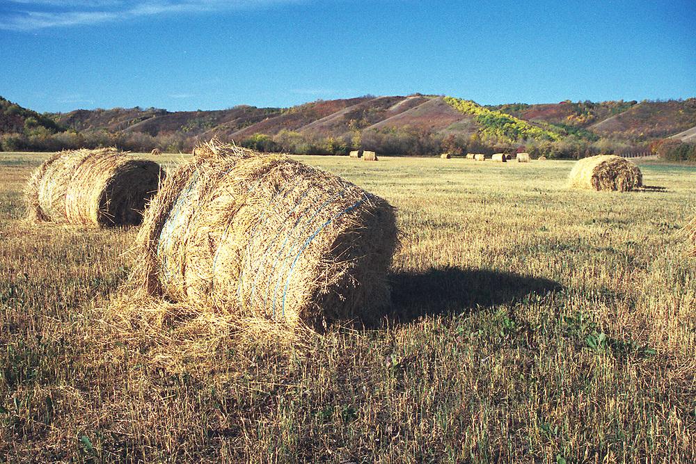 Bales of Straw lie in field, Qu'Appelle Valley, Saskatchewan