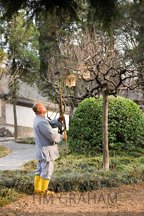 Monk hangs a caged Laughing Thrush onto a branch in the Monk's Garden, The Big Wild Goose Pagoda, Xian, China