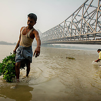 Jan 14, 2013 - Men wash greens under the Howrah Bridge on the shore of the Ganges or Ganga River as filler greenery for floral arrangement to be sold in the crowded streets the famed flower markets of Kolkata, India. <br /> <br /> Story Summary: It is said that the battle over global warming is to be won or lost in Asia. With growing populations and new economic boom in the global markets across Asia countries like India, Nepal and Cambodia have to grapple with the success and the environmental disaster that comes with ramped up production in unchecked or unregulated industries to compete in todays marketplace. The catastrophic air pollution makes for new problems to be dealt with such as a future health crisis, quality of life issues and the tarnished image of reduced visibility to world heritage sites for tourism.