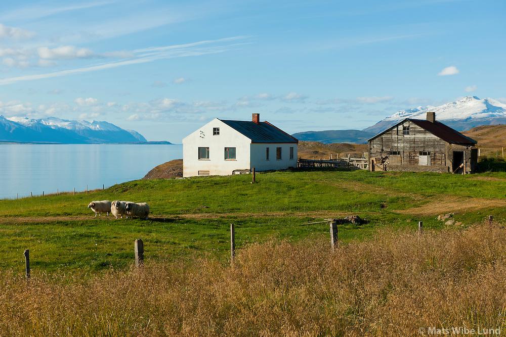 Miðvík séð til norðurs. Grýtubakkahreppur, Kaldbakur í baksýni t.h. /   Midvik viewing north, Grytubakkahreppur. Mount  Kaldbakur right in background.l