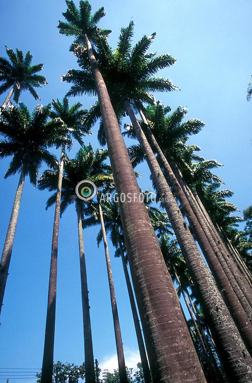 Rio de Janeiro, RJ, Brasil    1998.Jardim Botanico, parque na zona sul da cidade. Corredor de palmeiras imperiais./ Botanic Garden; south area of Rio de Janeiro..Foto Marcos Issa/Argosfoto