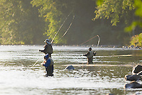 Three fly fisherman, in hip waiters, cast for Salmon in the Campbell River. Campbell River, British Columbia, Canada.