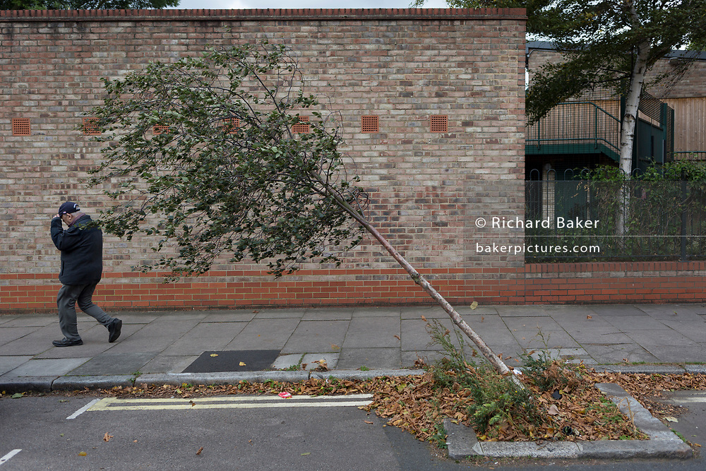 A man is pushed along the pavement on a windy day, walking past a bent young tree leaning at 45 degrees in a south London side street, on 11th September, 2017, in London, England.