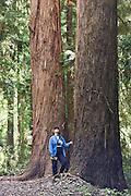 California Redwood, New Zealand