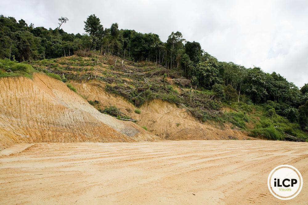 Clear cut rainforest, Kinabatangan River, Sabah, Borneo, Malaysia