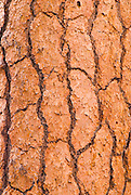 Detail of Ponderosa pine bark, Lassen Volcanic National Park, California