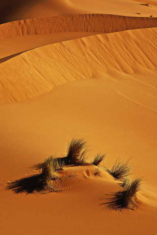 Dune Grass<br />