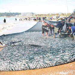 Sardine Run Durban South Africa