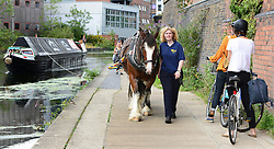 © Licensed to London News Pictures. 23/08/2012. London, UK. Cyclists wait for the horse and narrowboat to pass.  Ilkeston, a restored narrowboat, is towed by a horse, Buddy, a 13-year-old Clydesdale, across London's canal network, on its way to the London Canal Museum. It has journeyed from Ellesmere Port in Cheshire, through more than 100 locks, to London to celebrate its 100th birthday.. Photo credit : Stephen Simpson/LNP