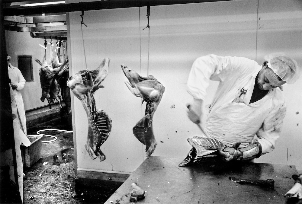 'Kangaroo Harvesting' ..Walgett Game Meats, north western NSW. Butchers carve up the kangaroo in the final process before packaging. The animal has already passed an inspection from a veterinarian on the way through the conveyor system of production...
