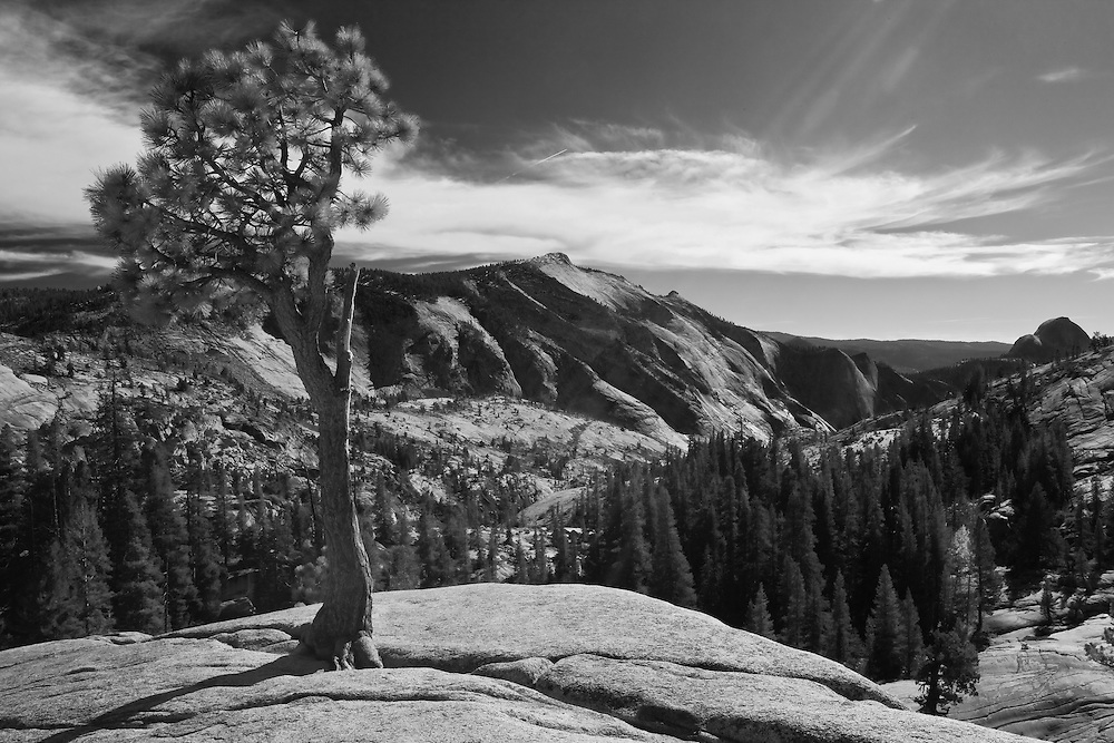 Taken in yosemite national park on tioga road this is a lone pine growing out of