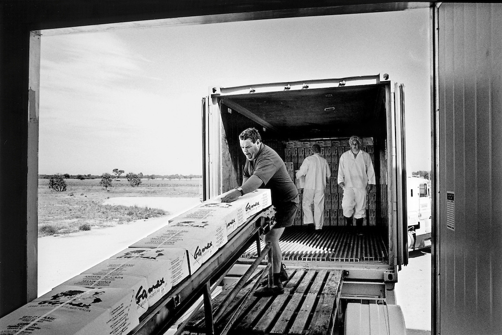 'Kangaroo Harvesting'..Walgett Game Meats, north western NSW. The wrapped and packaged kangaroo meat is loaded into the freezer truck for export.