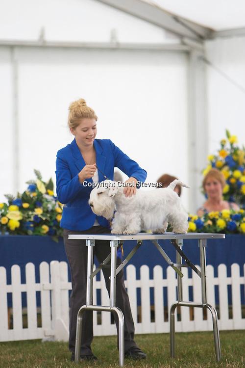 Zippor Break A Leg<br /> Sealyham Terrier<br /> Miss J Tobijanski &amp; Mrs W Tobijanski