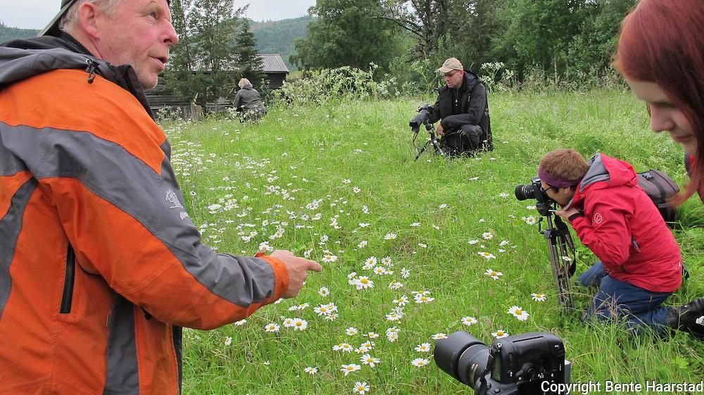 Kurs i makrofotografering, Rolset gård i Selbu, 1.-3. juli 2011. Kursleder: Ove Bergersen.