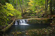 Whatcom Creek in Autumn Bellingham, Washington