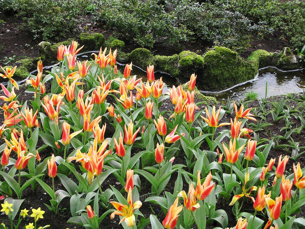 Garden at Keukenhof