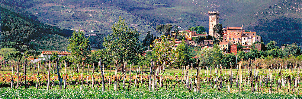 A small vineyard grows below the Tuscan village of Vicopisano, near Pisa, Italy.