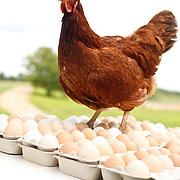 20120413 Tina Chickens & Turkeys