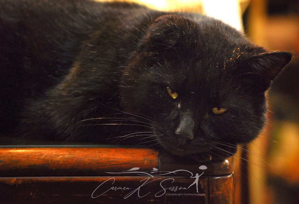Mr. Bojangles naps on a sales counter on Jan. 9, 2011 at the Antique Mall of Meridian in Meridian, Mississippi. The store is open Mondays through Saturdays from 9 a.m. to 5 p.m. (Photo by Carmen K. Sisson/Cloudybright)