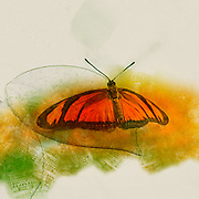 Digitally enhanced image of an orange butterfly in the Butterfly House in the Burggarten, Vienna, Austria