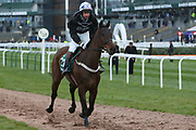 Shantou Magic and jockey Nick Phillips head down to the start for the 4.05PM The Randox Health Foxhunters' Steeple Chase (Class 2) 2m 5f during the Grand National Festival Week at Aintree, Liverpool, United Kingdom on 4 April 2019.
